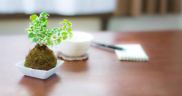 メモと観葉植物